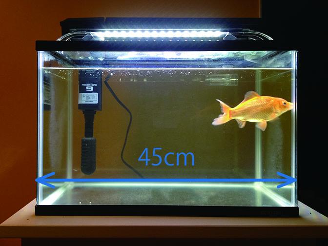 金魚水槽3