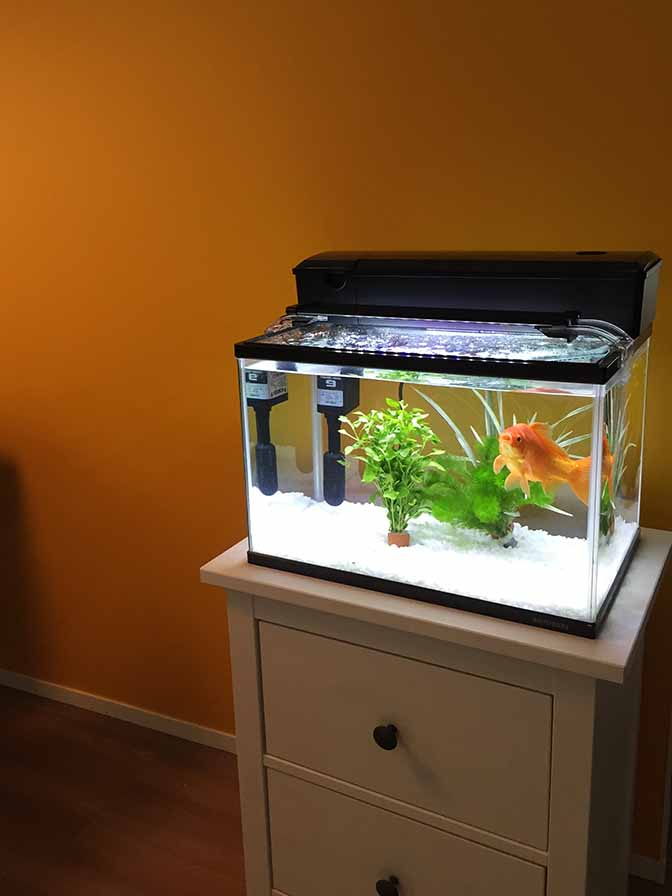 金魚201509-2