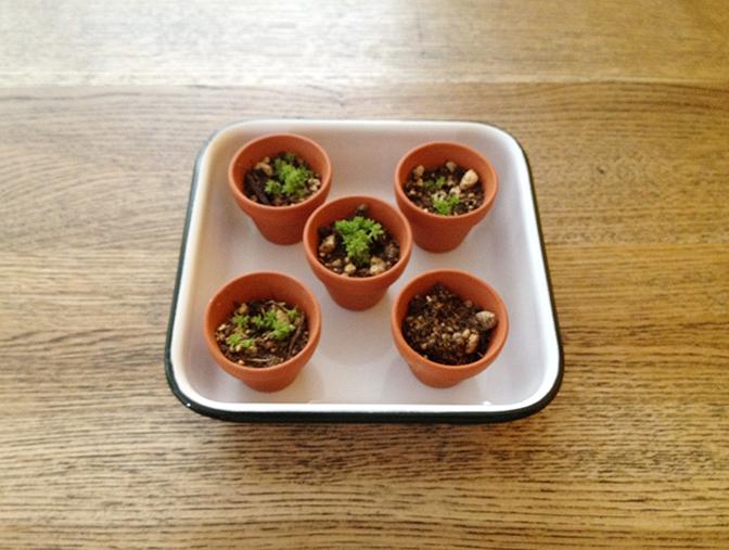 小さな植木鉢用雑貨3