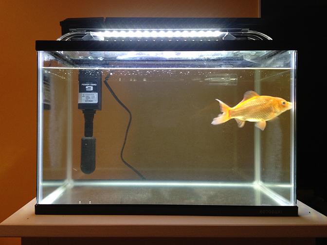 金魚水槽2