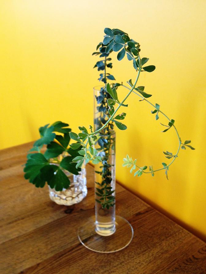 テーブルの植物1