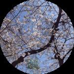 【トラブルその後】春を待つ