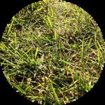 二次外構〜ベストシーズンではない夏の終わりに芝生を植えた「結果」