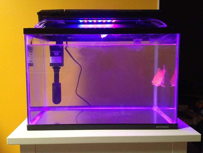 金魚水槽4