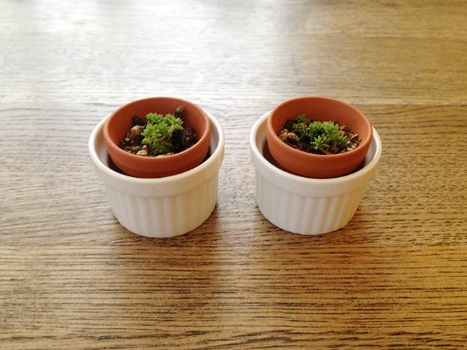 小さな植木鉢用雑貨4