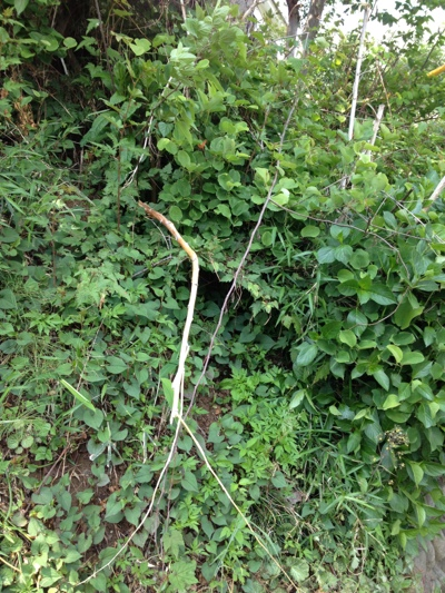 fc2blog_20130516135253fa6