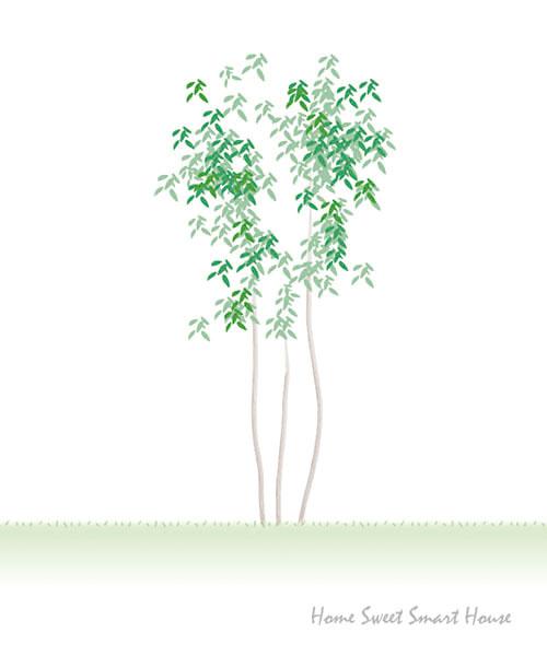 シンボルツリーアオダモのイラスト(想像図) 一条工務店 i- smart アイスマート 外溝 庭 落葉樹 ローメンテ モダン おしゃれ